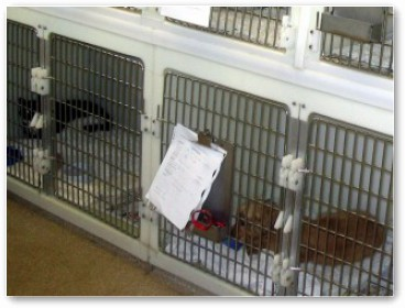 If your pet needs an operation, they will have their own 'kennel' during their visit.